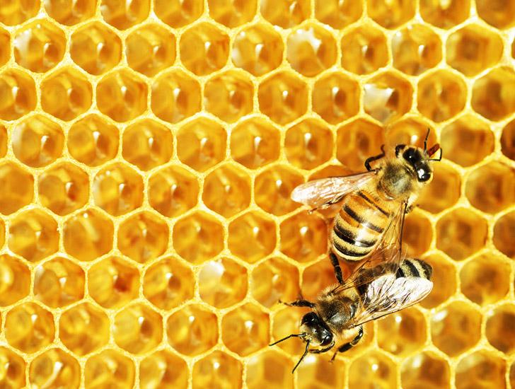 Bảo quản mật ong rừng như thế nào là tốt nhất?