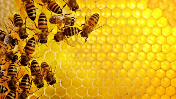 Công dụng tuyệt vời của mật ong rừng nguyên chất