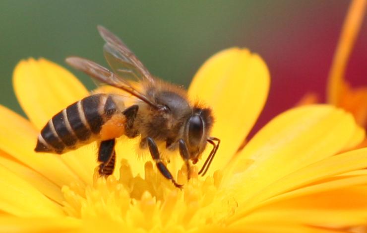 Mật ong rừng tự nhiên có bị lên men không?