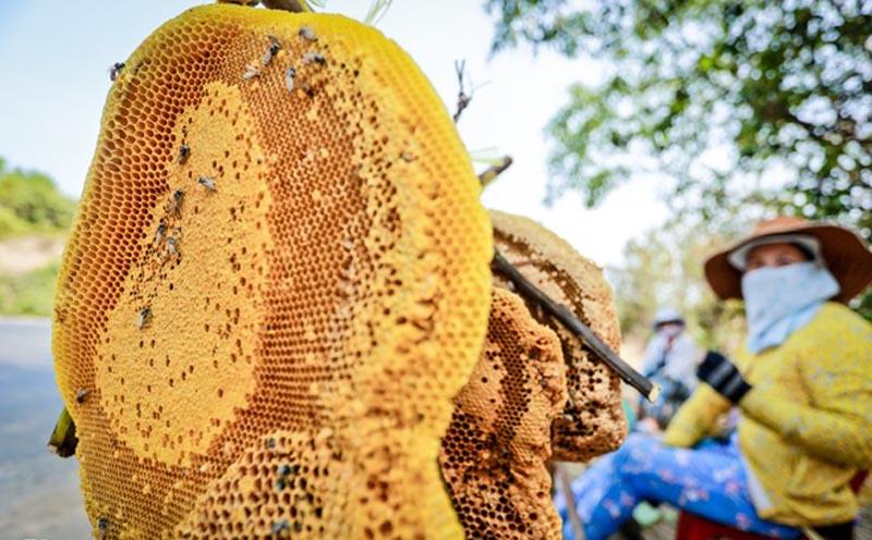 So sánh mật ong rừng và mật ong nuôi