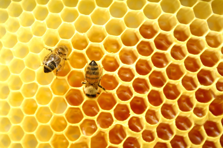 Tìm địa chỉ bán mật ong rừng uy tín tại Hà Nội